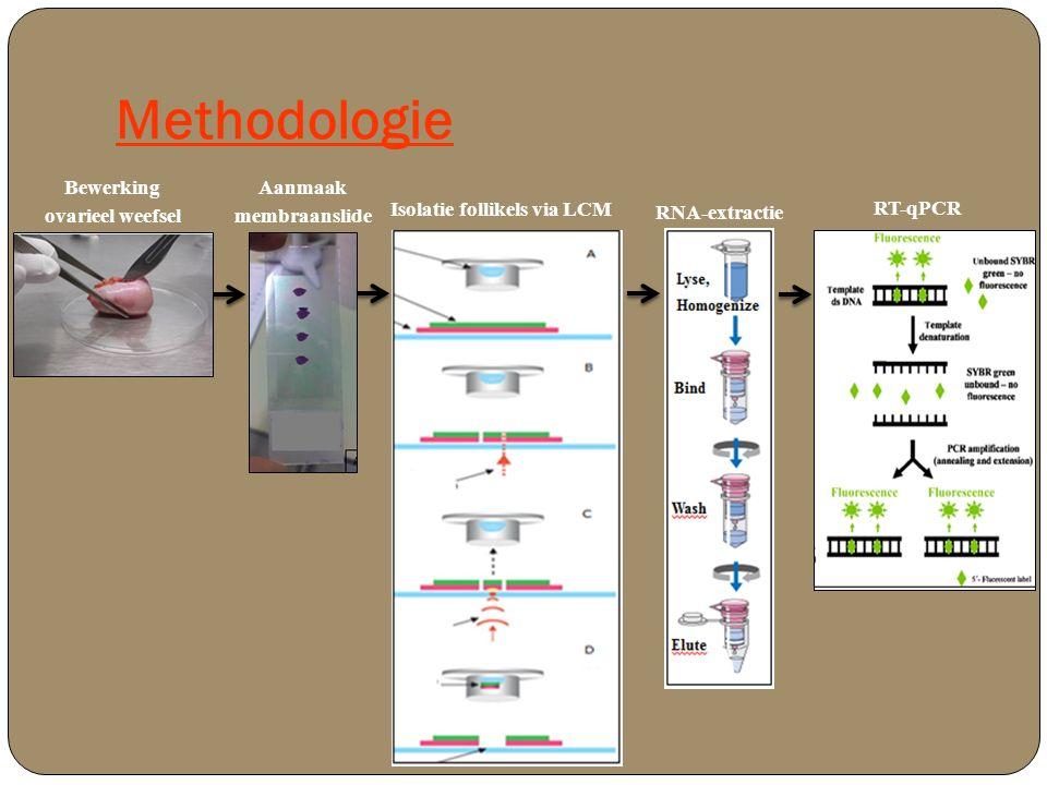 Methodologie Bewerking ovarieel weefsel Aanmaak membraanslide Isolatie follikels via LCM RNA-extractie RT-qPCR