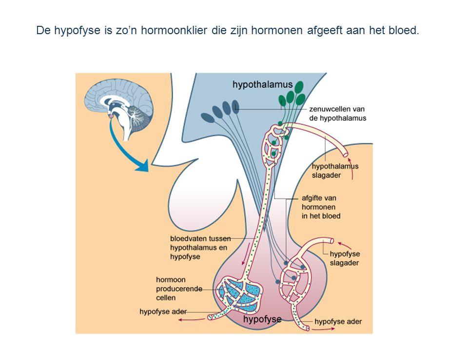 De hypofyse is zo'n hormoonklier die zijn hormonen afgeeft aan het bloed.