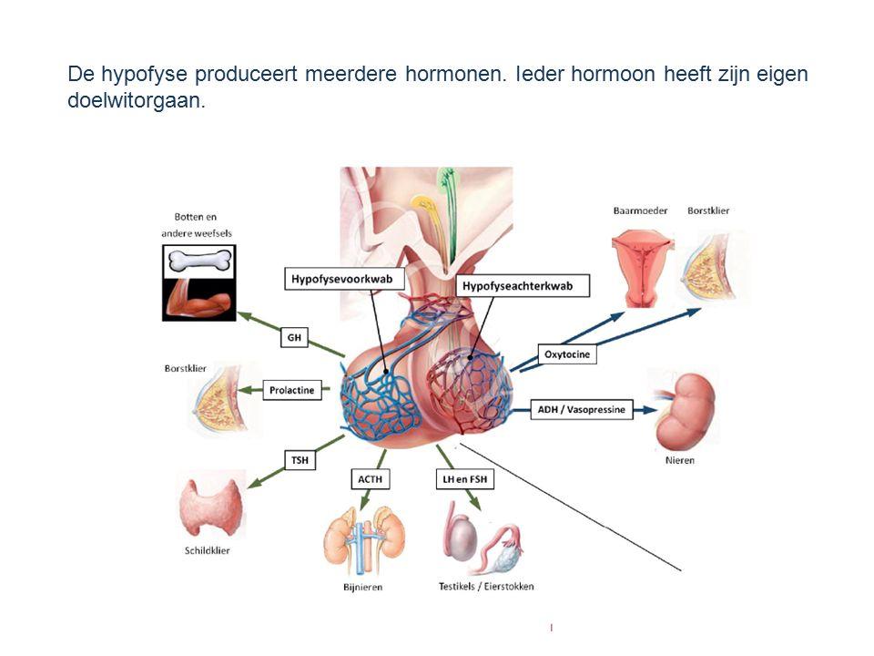 De hypofyse produceert meerdere hormonen. Ieder hormoon heeft zijn eigen doelwitorgaan.
