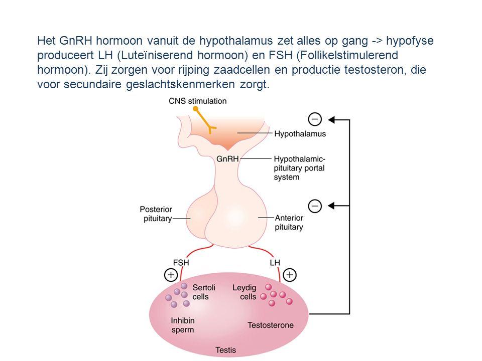 Het GnRH hormoon vanuit de hypothalamus zet alles op gang -> hypofyse produceert LH (Luteïniserend hormoon) en FSH (Follikelstimulerend hormoon). Zij