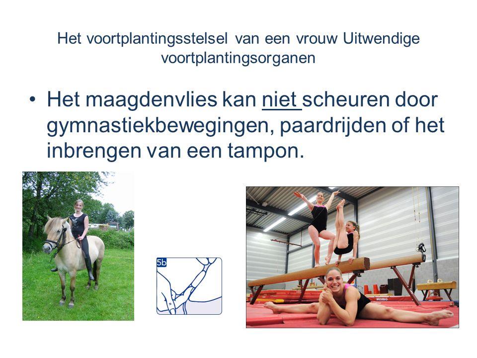 Het maagdenvlies kan niet scheuren door gymnastiekbewegingen, paardrijden of het inbrengen van een tampon. Het voortplantingsstelsel van een vrouw Uit