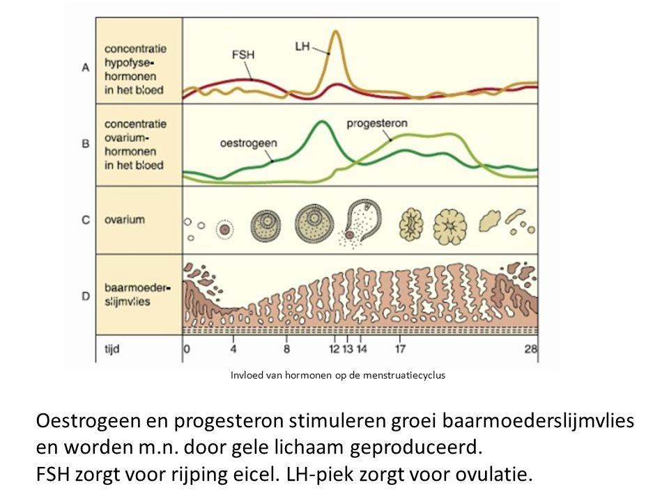 Invloed van hormonen op de menstruatiecyclus Oestrogeen en progesteron stimuleren groei baarmoederslijmvlies en worden m.n. door gele lichaam geproduc