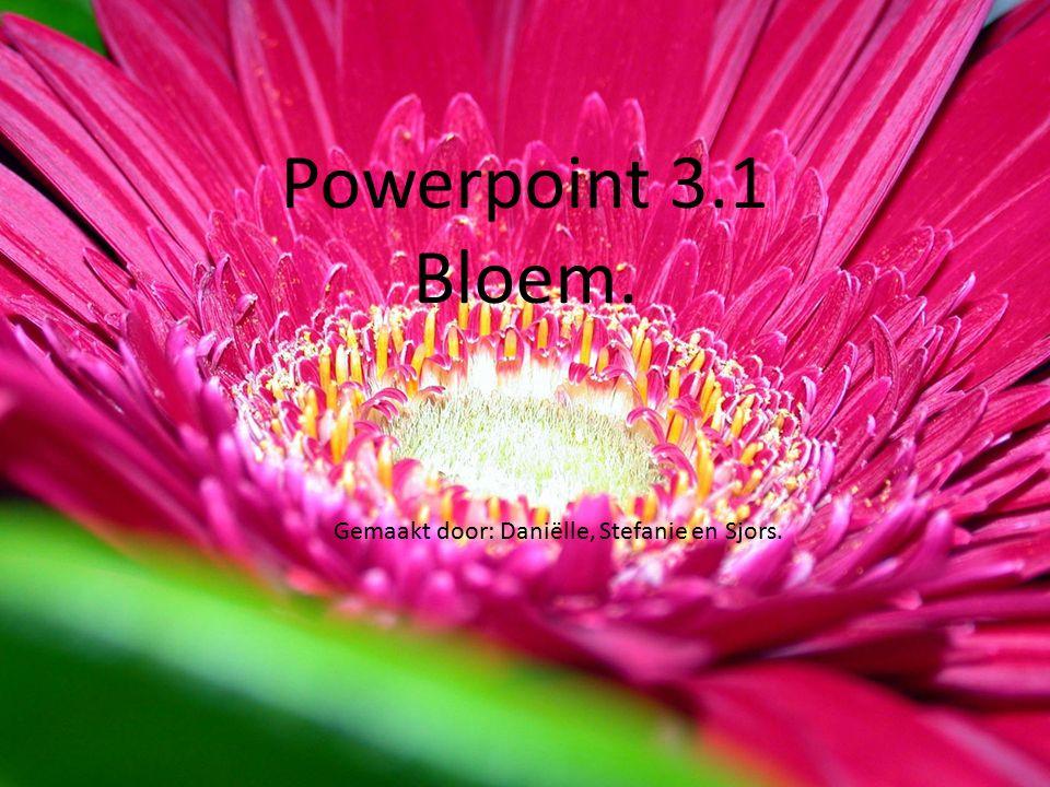 Powerpoint 3.1 bloem. Powerpoint 3.1 Bloem. Gemaakt door: Daniëlle, Stefanie en Sjors.