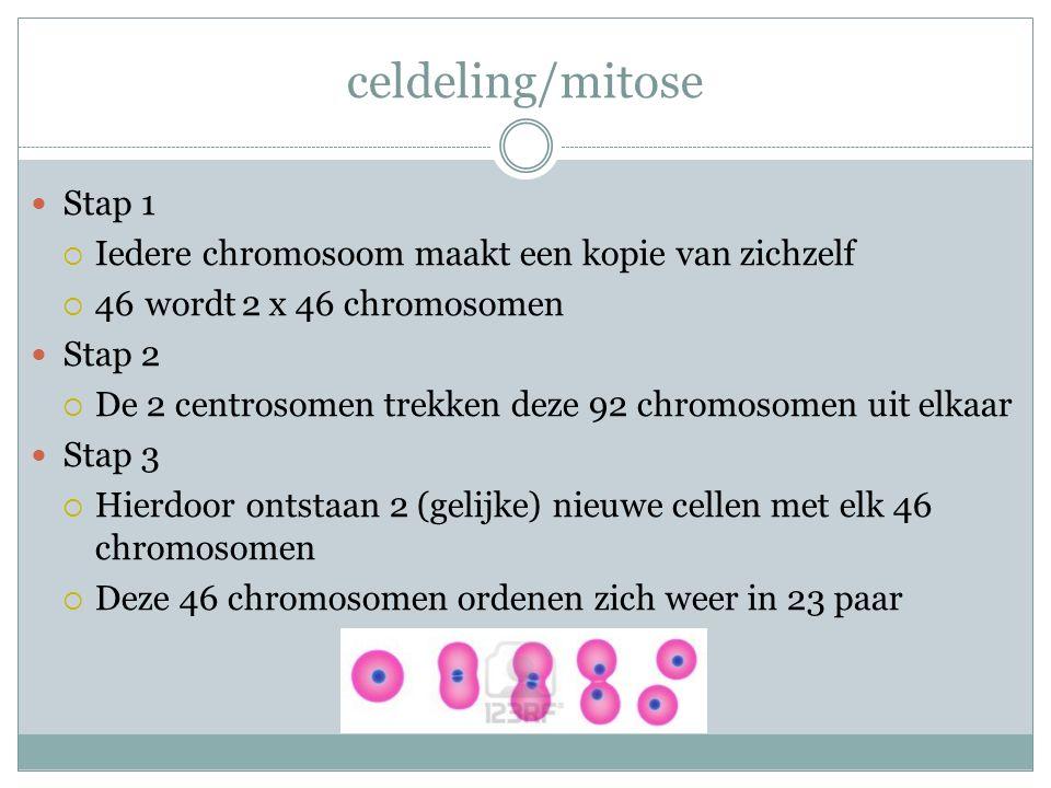 celdeling/mitose Stap 1  Iedere chromosoom maakt een kopie van zichzelf  46 wordt2 x 46 chromosomen Stap 2  De 2 centrosomen trekken deze 92 chromo