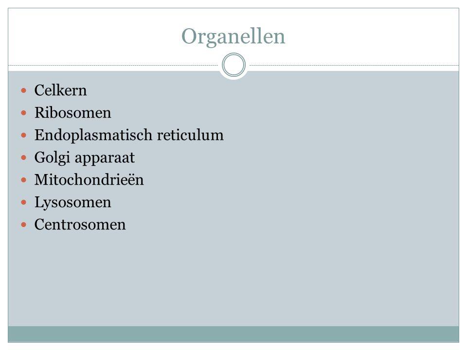 Organellen Celkern Ribosomen Endoplasmatisch reticulum Golgi apparaat Mitochondrieën Lysosomen Centrosomen