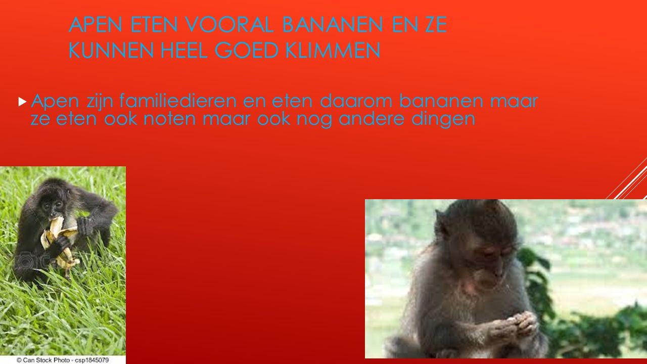 APEN ETEN VOORAL BANANEN EN ZE KUNNEN HEEL GOED KLIMMEN  Apen zijn familiedieren en eten daarom bananen maar ze eten ook noten maar ook nog andere di