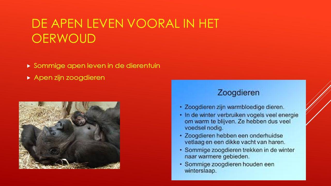 DE APEN LEVEN VOORAL IN HET OERWOUD  Sommige apen leven in de dierentuin  Apen zijn zoogdieren