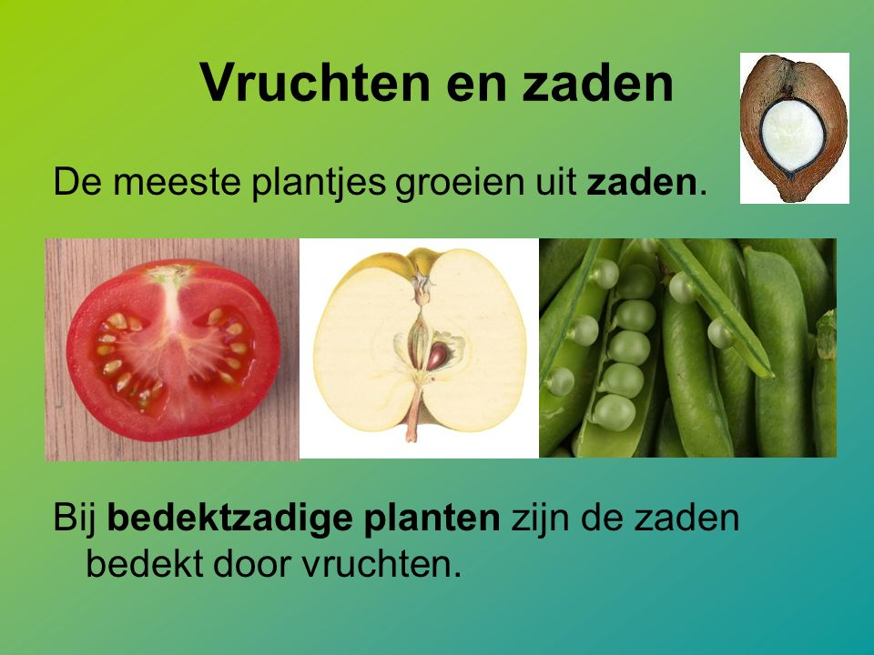 Vruchten en zaden De meeste plantjes groeien uit zaden. Bij bedektzadige planten zijn de zaden bedekt door vruchten.