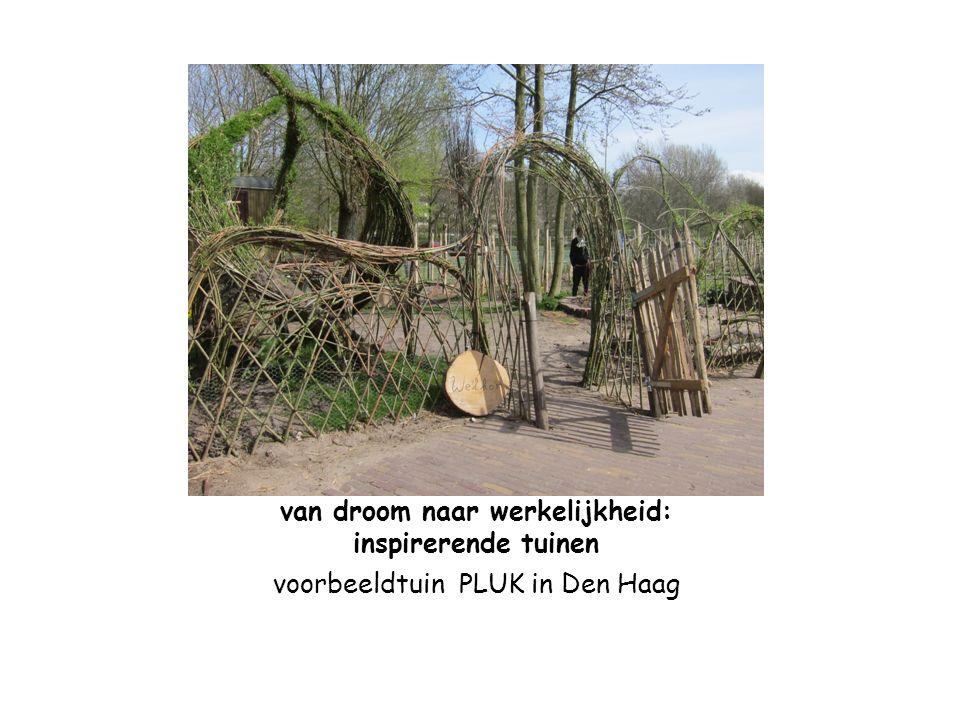 van droom naar werkelijkheid: inspirerende tuinen voorbeeldtuin PLUK in Den Haag