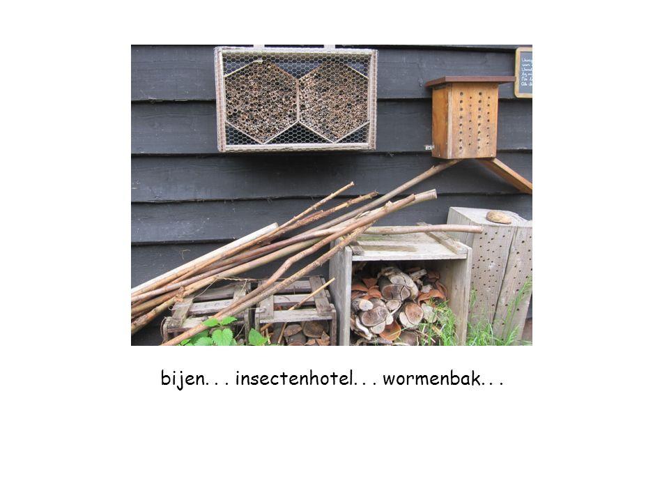 bijen... insectenhotel... wormenbak...