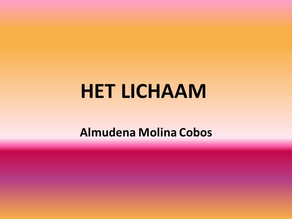 HET LICHAAM Almudena Molina Cobos