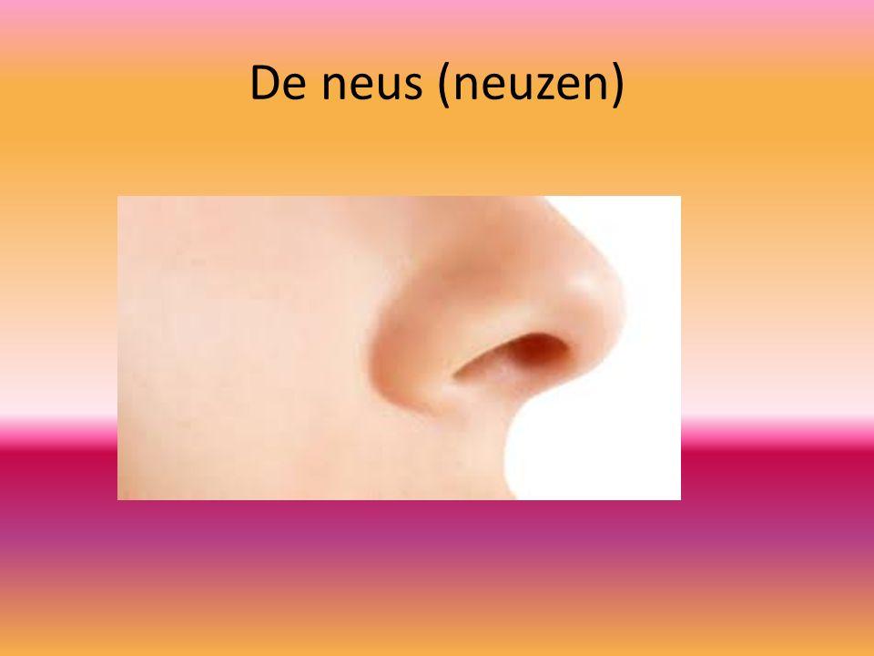 De neus (neuzen)