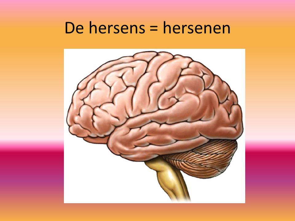 De hersens = hersenen