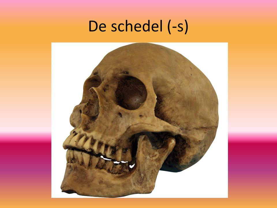 De schedel (-s)