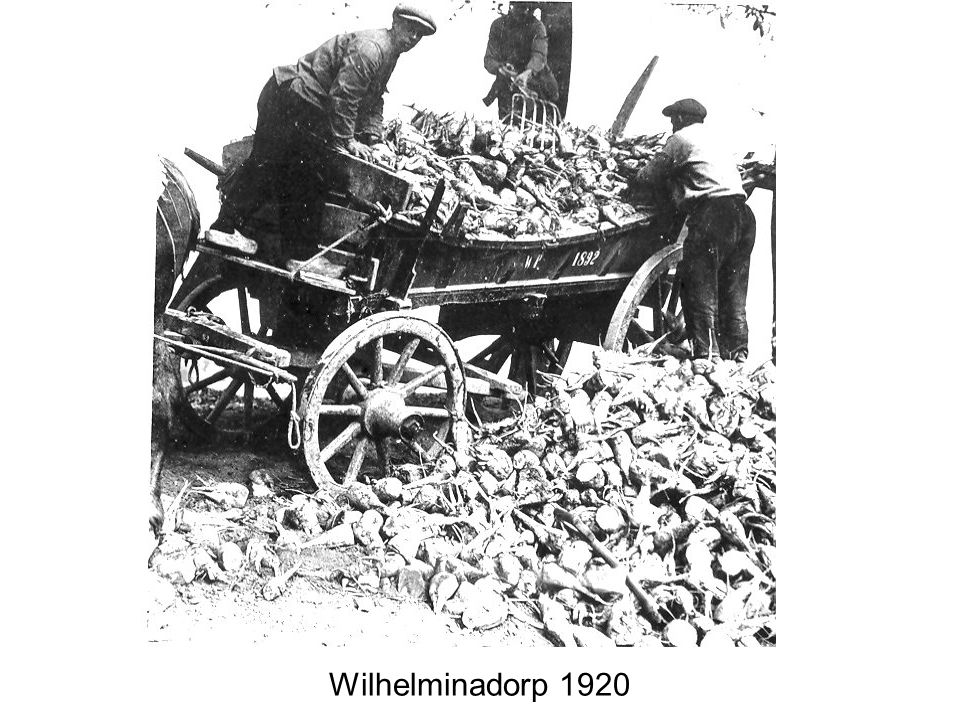 Wilhelminadorp 1920