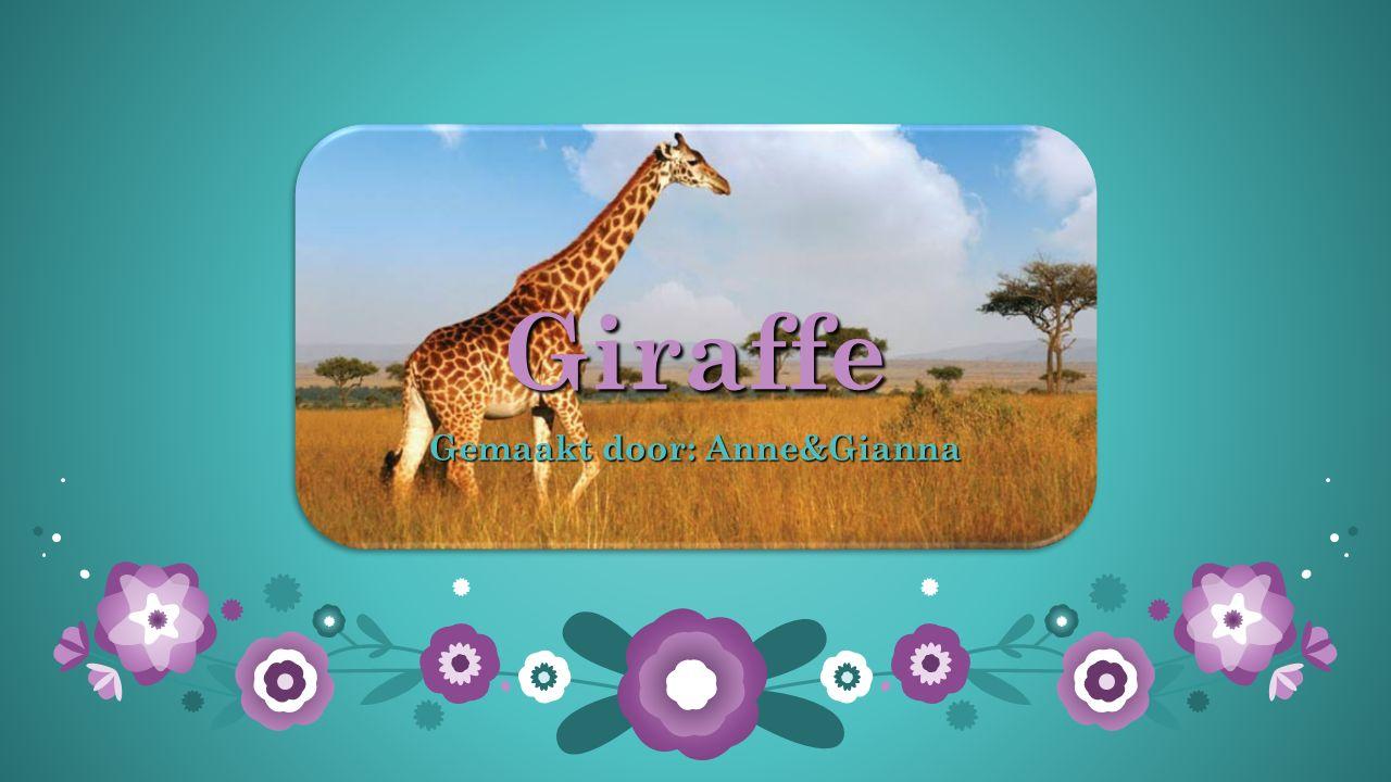 Giraffe Gemaakt door: Anne&Gianna