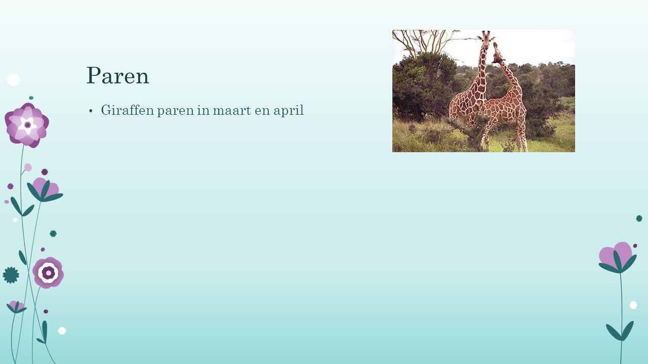 Paren Giraffen paren in maart en april