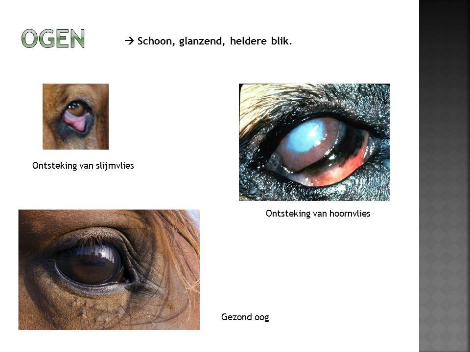 Ontsteking van hoornvlies Ontsteking van slijmvlies  Schoon, glanzend, heldere blik. Gezond oog