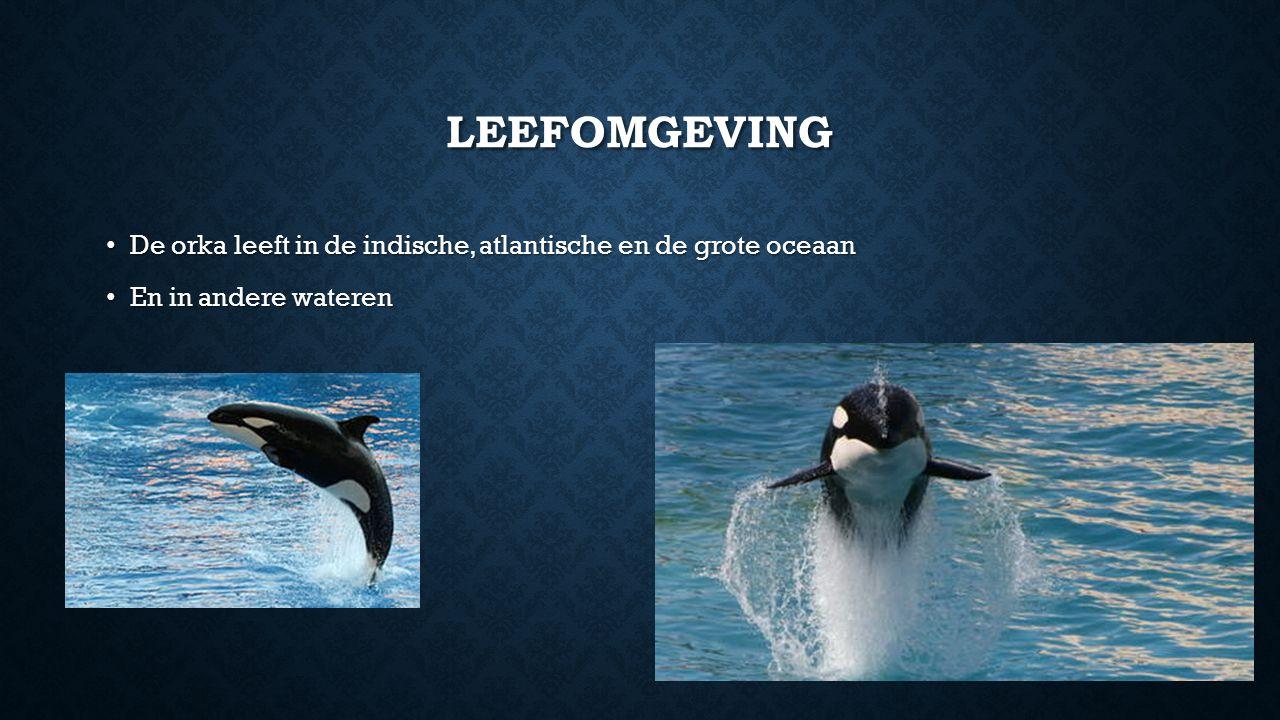LEEFOMGEVING De orka leeft in de indische, atlantische en de grote oceaan De orka leeft in de indische, atlantische en de grote oceaan En in andere wateren En in andere wateren