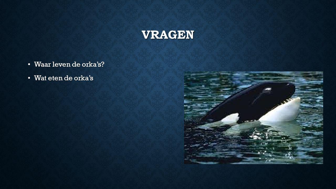VRAGEN Waar leven de orka's? Waar leven de orka's? Wat eten de orka's Wat eten de orka's
