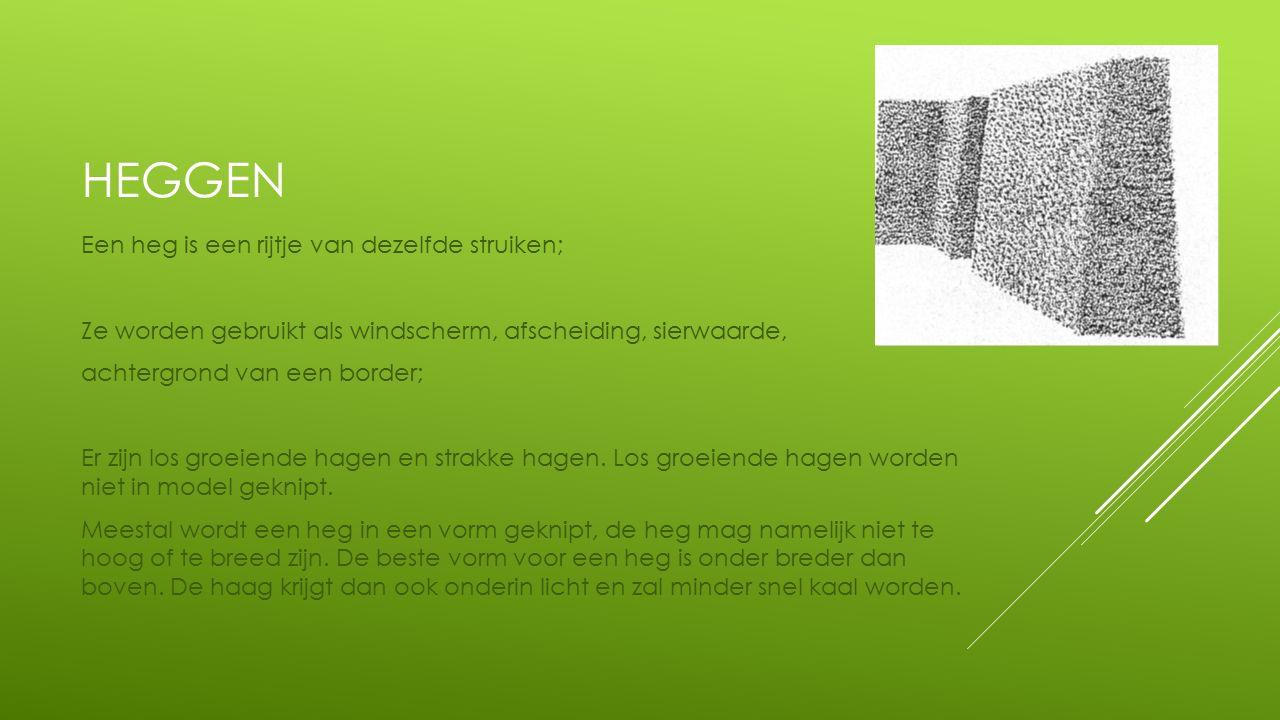 HEGGEN Een heg is een rijtje van dezelfde struiken; Ze worden gebruikt als windscherm, afscheiding, sierwaarde, achtergrond van een border; Er zijn los groeiende hagen en strakke hagen.