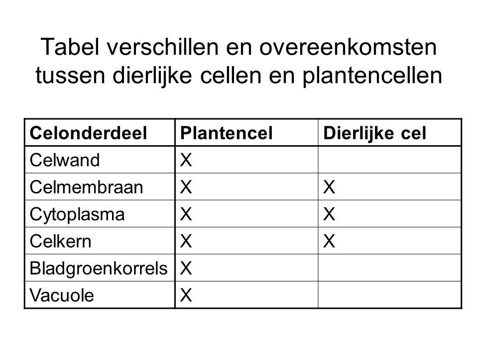 Tabel verschillen en overeenkomsten tussen dierlijke cellen en plantencellen CelonderdeelPlantencelDierlijke cel CelwandX CelmembraanXX CytoplasmaXX C
