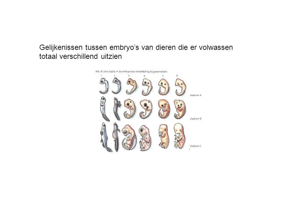 Gelijkenissen tussen embryo's van dieren die er volwassen totaal verschillend uitzien