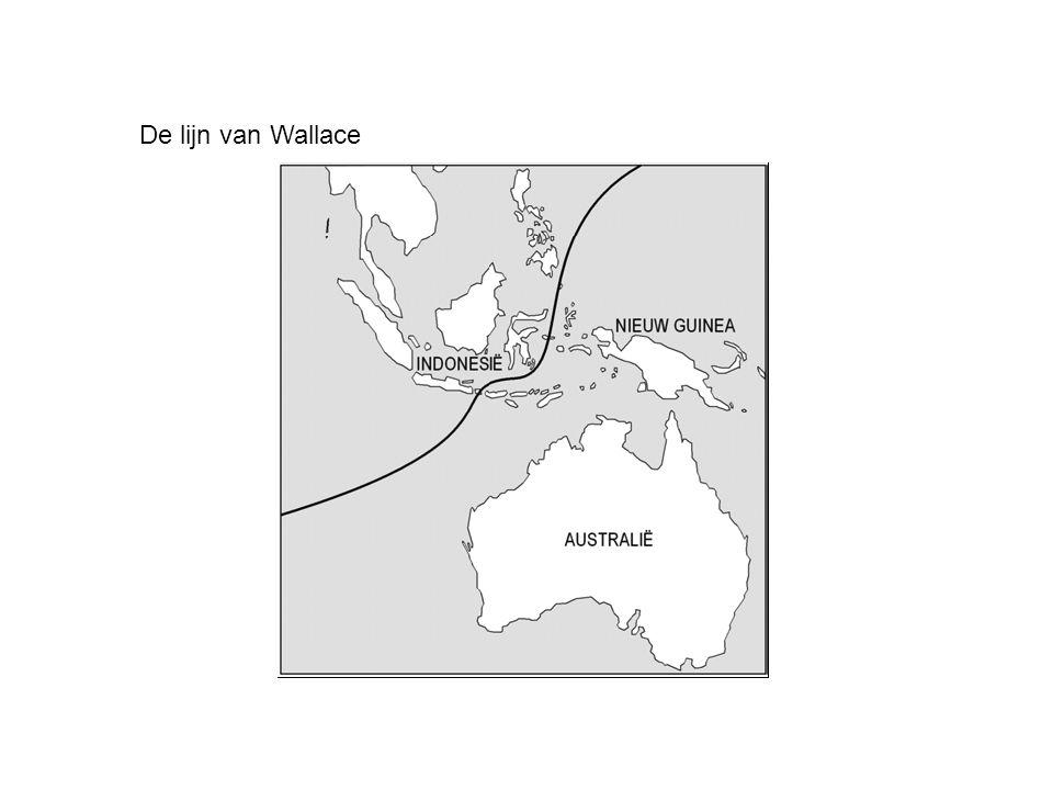 De lijn van Wallace