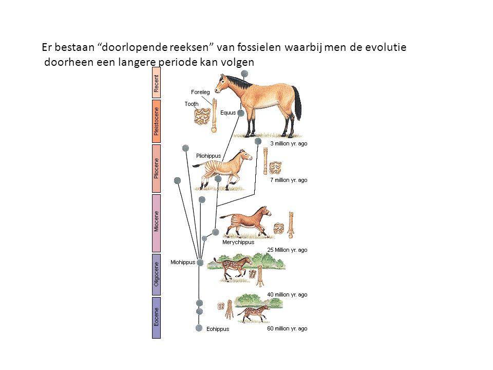 Er bestaan doorlopende reeksen van fossielen waarbij men de evolutie doorheen een langere periode kan volgen