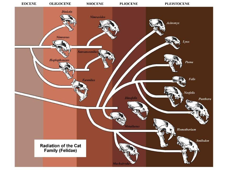 Evolutie van walvisachtigen van viervoeter tot walvis