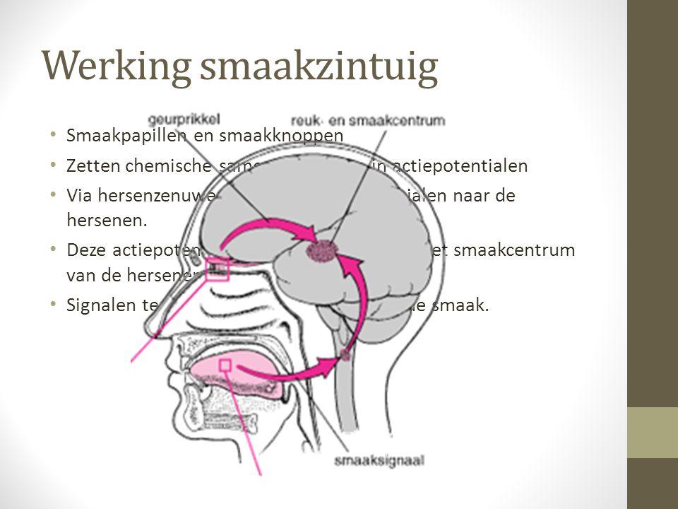 Werking smaakzintuig Smaakpapillen en smaakknoppen Zetten chemische samenstelling om in actiepotentialen Via hersenzenuwen gaan die actiepotentialen n