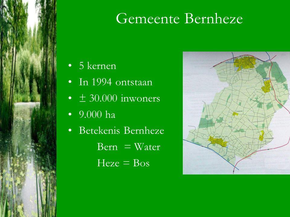 Gemeente Bernheze 5 kernen In 1994 ontstaan ± 30.000 inwoners 9.000 ha Betekenis Bernheze Bern = Water Heze = Bos
