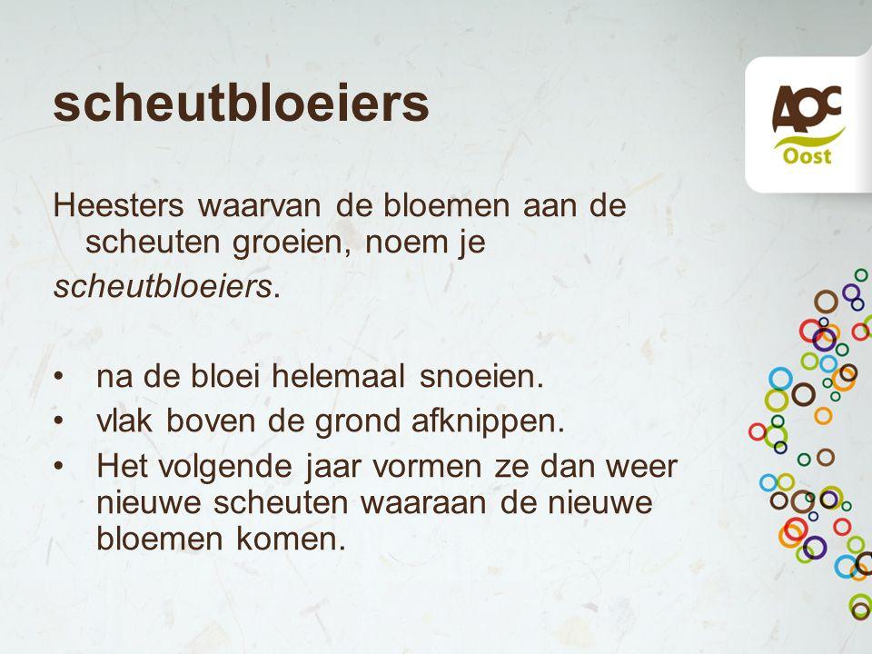 scheutbloeiers Heesters waarvan de bloemen aan de scheuten groeien, noem je scheutbloeiers. na de bloei helemaal snoeien. vlak boven de grond afknippe