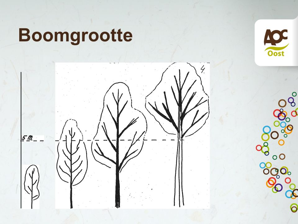 Boomgrootte
