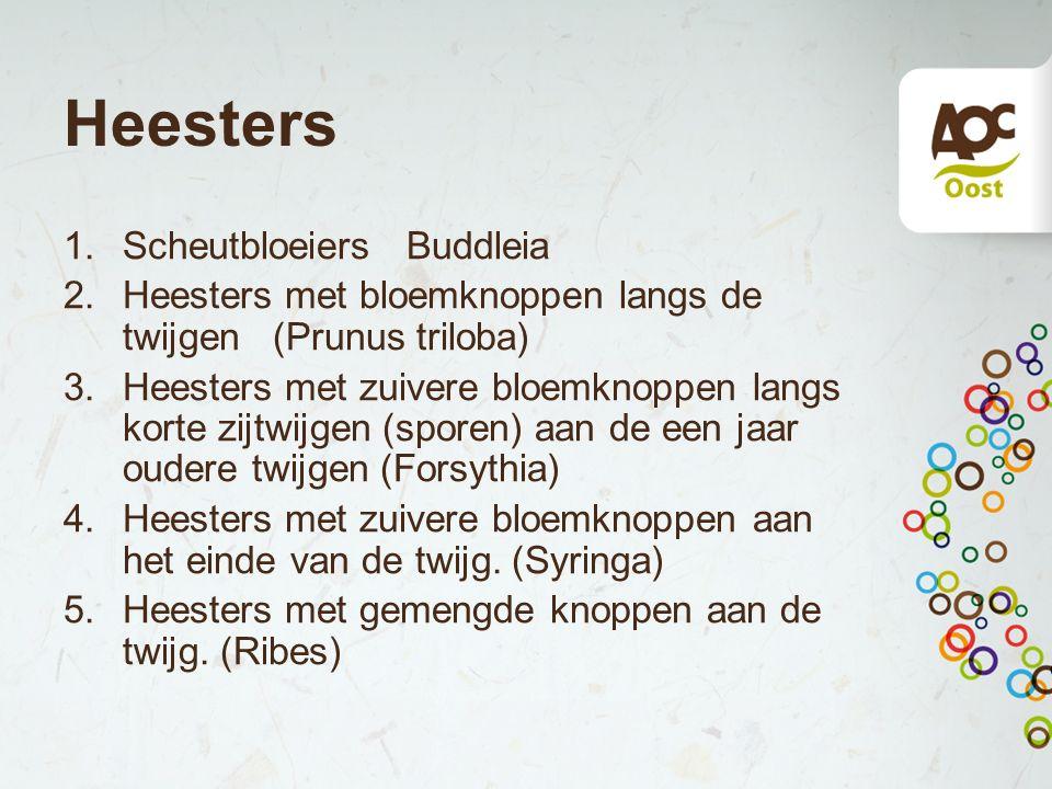 Heesters 1.Scheutbloeiers Buddleia 2.Heesters met bloemknoppen langs de twijgen (Prunus triloba) 3.Heesters met zuivere bloemknoppen langs korte zijtw