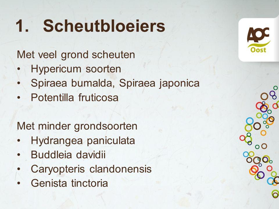 1. Scheutbloeiers Met veel grond scheuten Hypericum soorten Spiraea bumalda, Spiraea japonica Potentilla fruticosa Met minder grondsoorten Hydrangea p