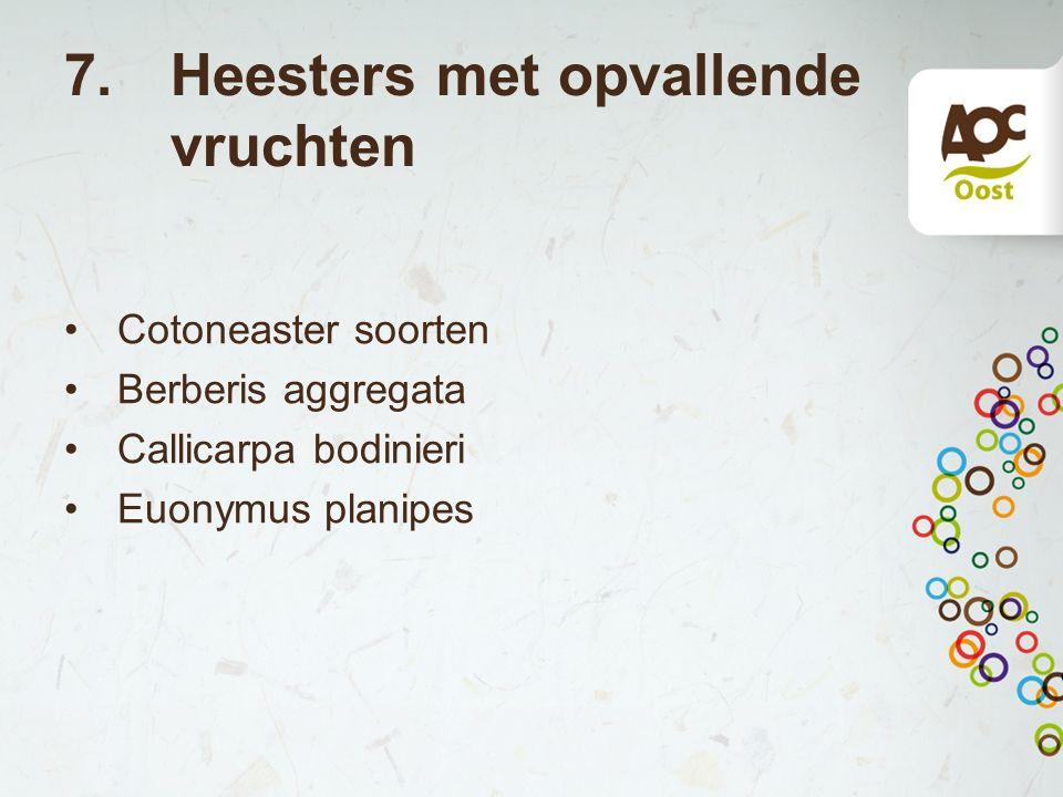 7.Heesters met opvallende vruchten Cotoneaster soorten Berberis aggregata Callicarpa bodinieri Euonymus planipes