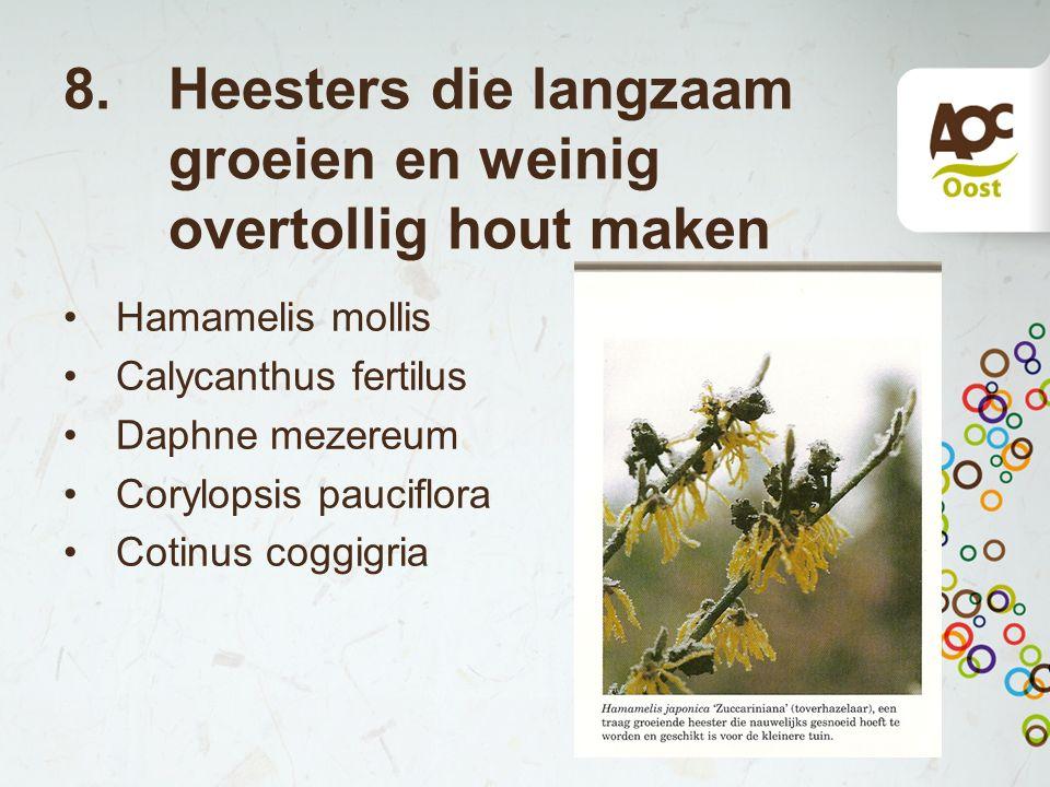 8. Heesters die langzaam groeien en weinig overtollig hout maken Hamamelis mollis Calycanthus fertilus Daphne mezereum Corylopsis pauciflora Cotinus c
