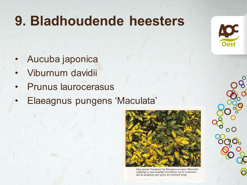 9. Bladhoudende heesters Aucuba japonica Viburnum davidii Prunus laurocerasus Elaeagnus pungens 'Maculata'