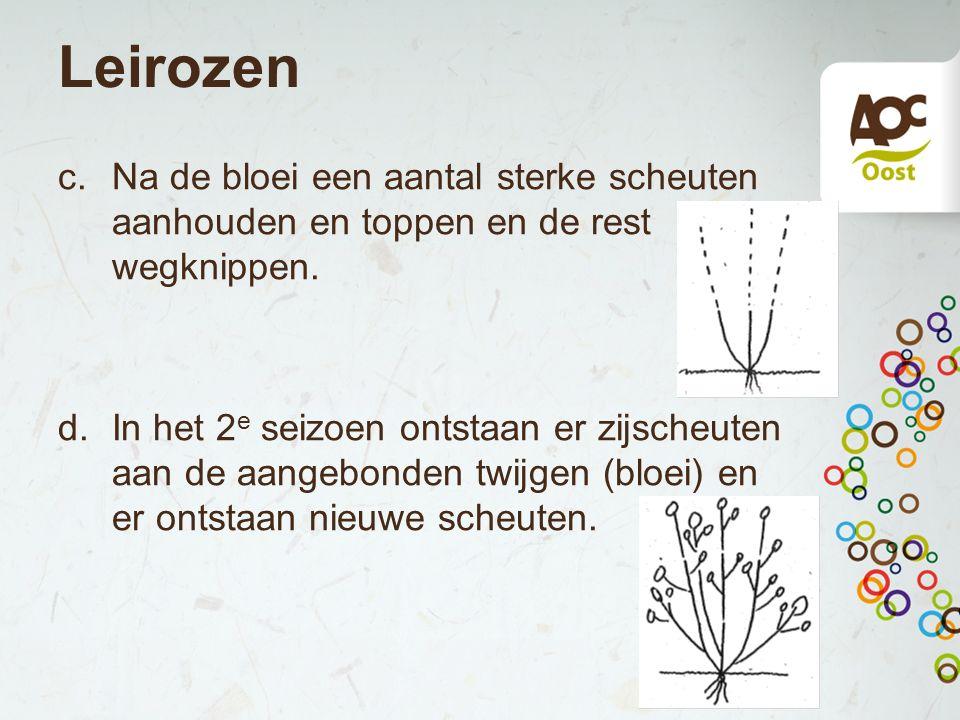 Leirozen c.Na de bloei een aantal sterke scheuten aanhouden en toppen en de rest wegknippen. d.In het 2 e seizoen ontstaan er zijscheuten aan de aange