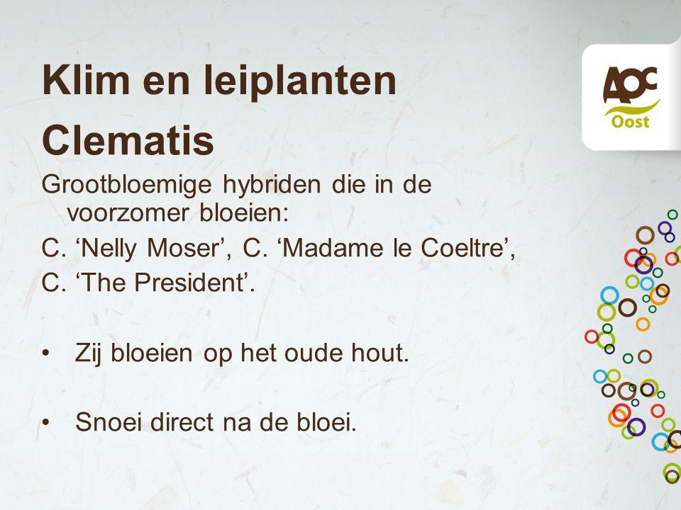 Klim en leiplanten Clematis Grootbloemige hybriden die in de voorzomer bloeien: C. 'Nelly Moser', C. 'Madame le Coeltre', C. 'The President'. Zij bloe