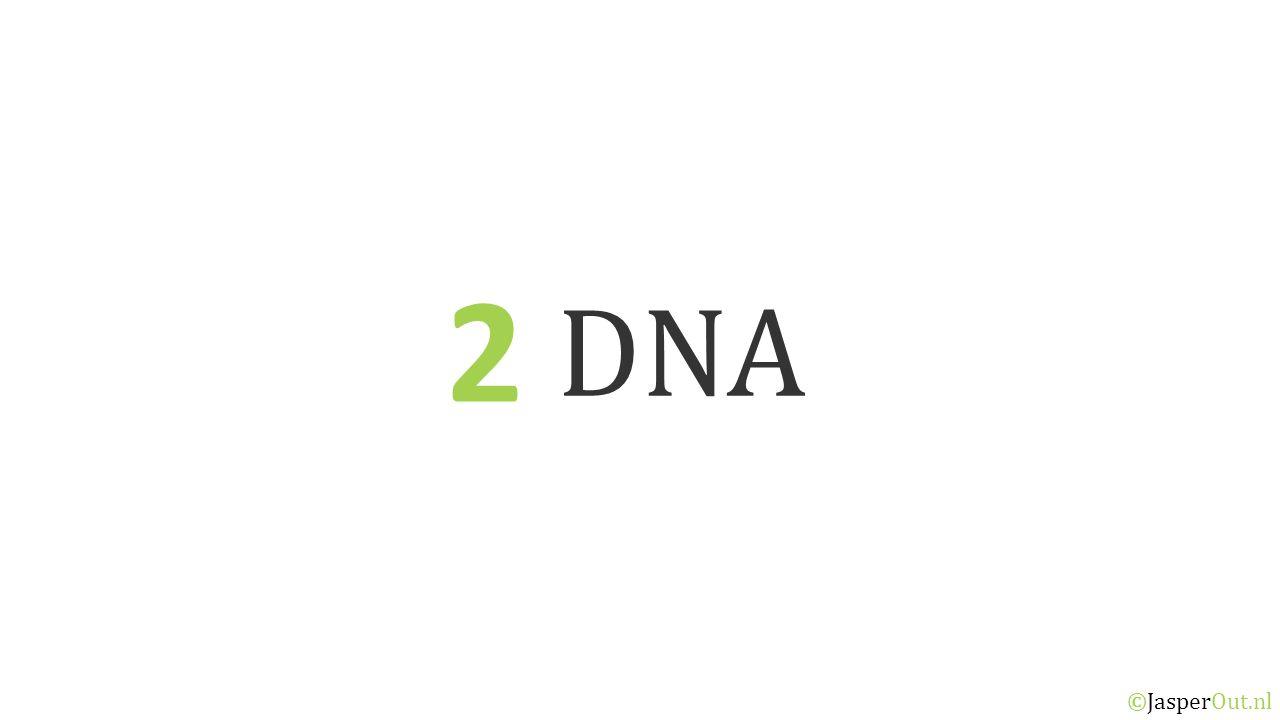 DNA 2.3 ©JasperOut.nl Eiwitsynthese RNA RNA is een 'boodschapper-molecuul' dat de code van een gen overbrengt naar de ribosomen in het cytoplasma.