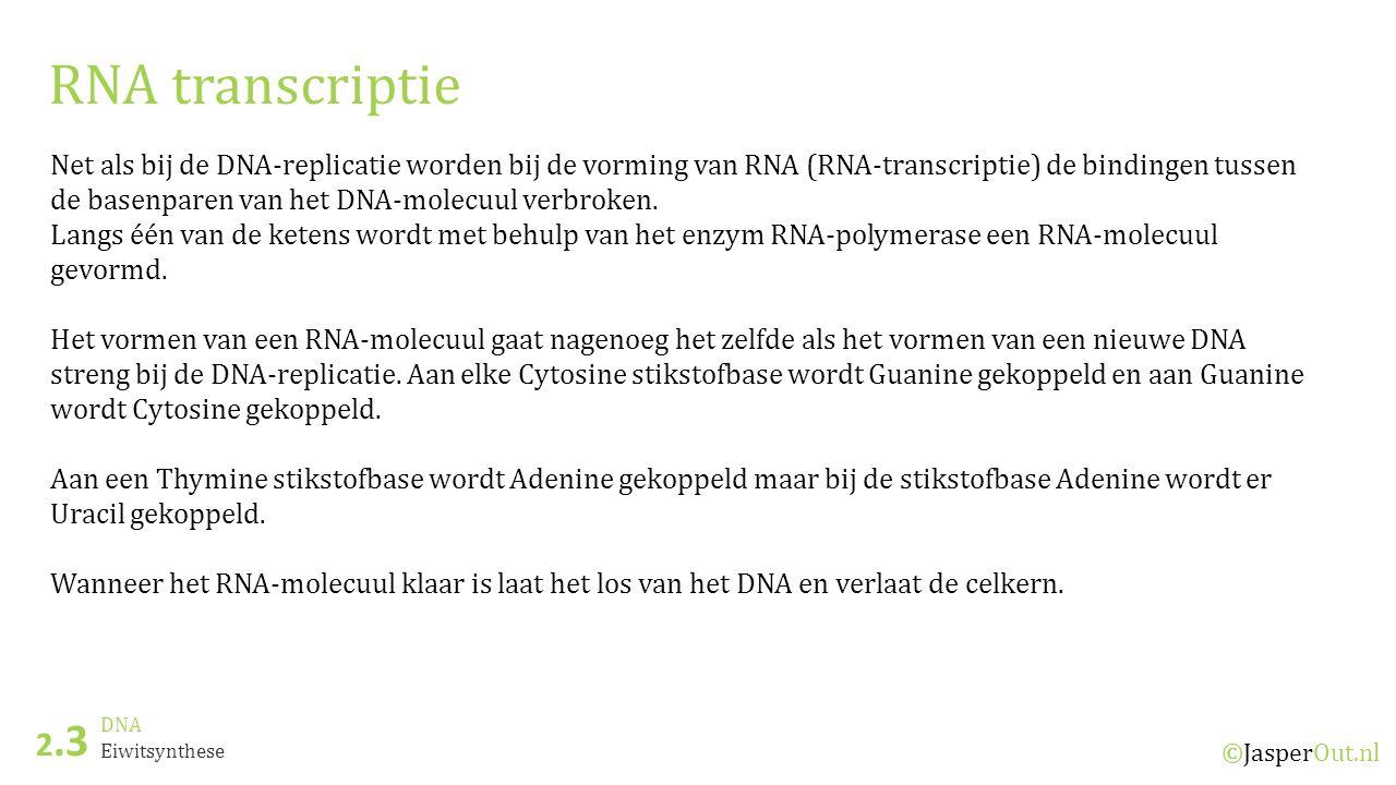 DNA 2.3 ©JasperOut.nl Eiwitsynthese RNA transcriptie Net als bij de DNA-replicatie worden bij de vorming van RNA (RNA-transcriptie) de bindingen tusse