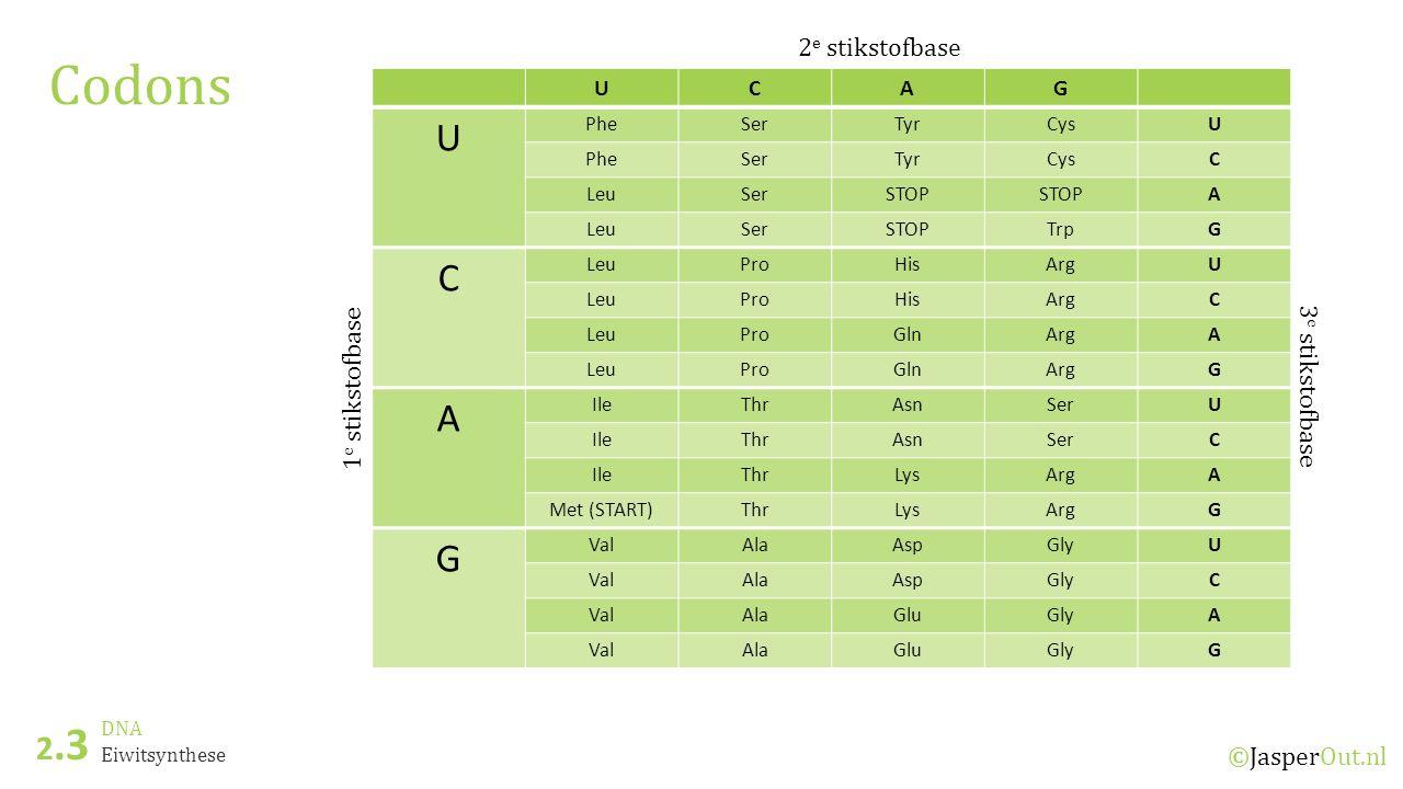 DNA 2.3 ©JasperOut.nl Eiwitsynthese Codons UCAG U PheSerTyrCysU PheSerTyrCysC LeuSerSTOP A LeuSerSTOPTrpG C LeuProHisArgU LeuProHisArgC LeuProGlnArgA