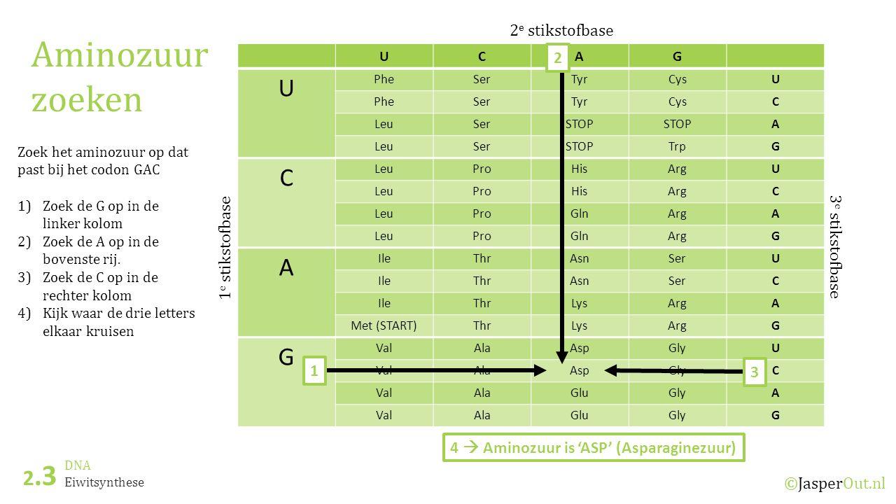 DNA 2.3 ©JasperOut.nl Eiwitsynthese Aminozuur zoeken UCAG U PheSerTyrCysU PheSerTyrCysC LeuSerSTOP A LeuSerSTOPTrpG C LeuProHisArgU LeuProHisArgC LeuP