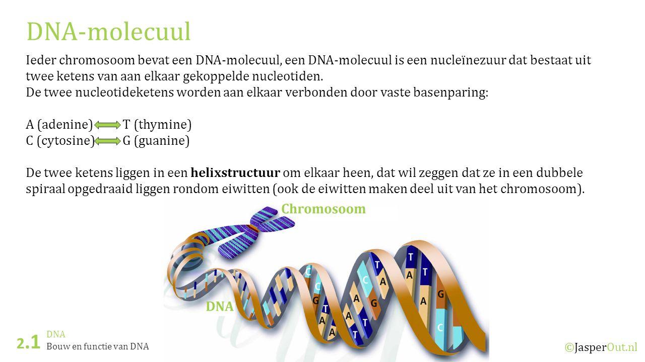 DNA 2.1 ©JasperOut.nl Bouw en functie van DNA DNA-molecuul Ieder chromosoom bevat een DNA-molecuul, een DNA-molecuul is een nucleïnezuur dat bestaat u