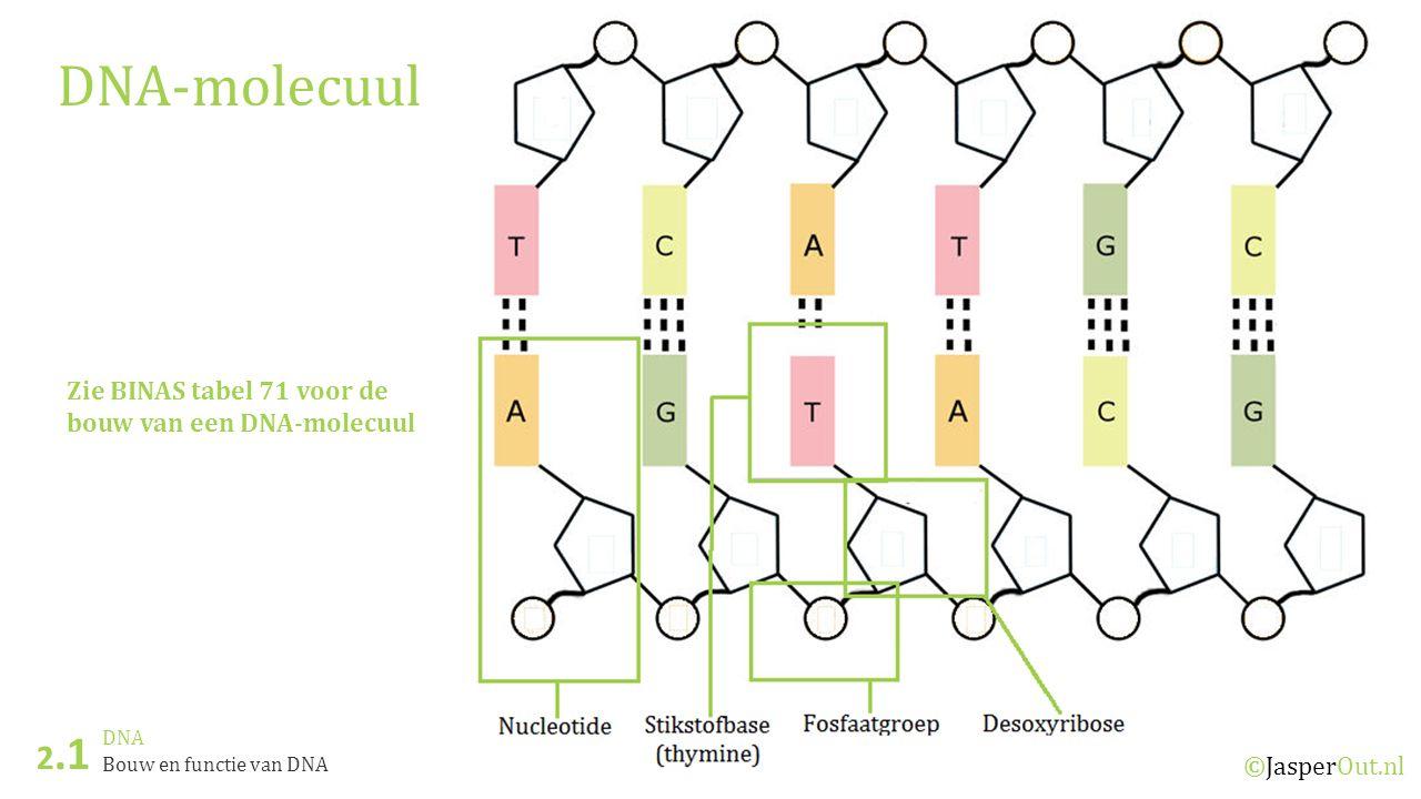 DNA 2.3 ©JasperOut.nl Eiwitsynthese Aminozuur zoeken UCAG U PheSerTyrCysU PheSerTyrCysC LeuSerSTOP A LeuSerSTOPTrpG C LeuProHisArgU LeuProHisArgC LeuProGlnArgA LeuProGlnArgG A IleThrAsnSerU IleThrAsnSerC IleThrLysArgA Met (START)ThrLysArgG G ValAlaAspGlyU ValAlaAspGlyC ValAlaGluGlyA ValAlaGluGlyG 1 e stikstofbase 2 e stikstofbase 3 e stikstofbase Zoek het aminozuur op dat past bij het codon GAC 1)Zoek de G op in de linker kolom 2)Zoek de A op in de bovenste rij.