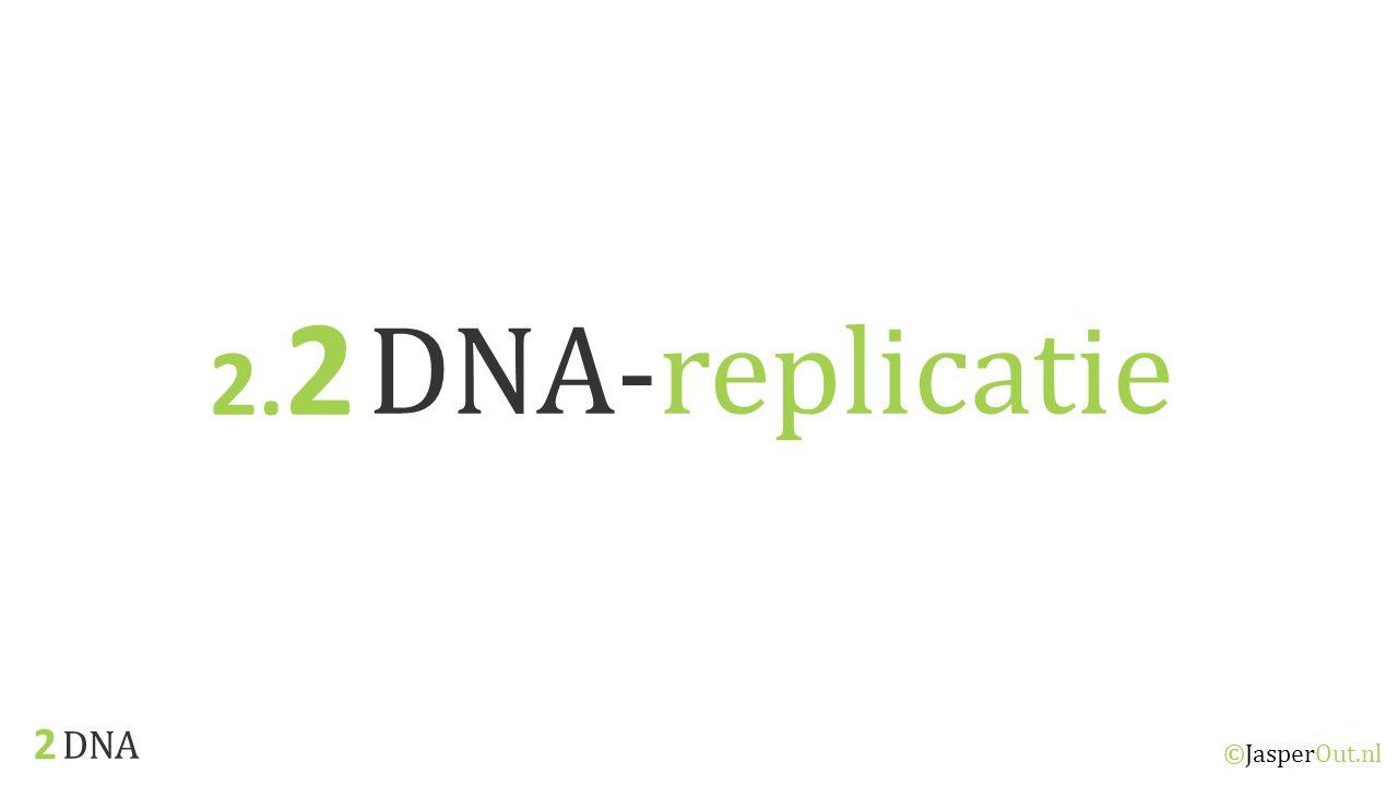 DNA 2.2 ©JasperOut.nl DNA-replicatie Celcyclus Tijdens de celcyclus moeten de chromosomen in een cel worden gekopieerd zodat deze verdeeld kunnen worden over de dochtercellen die tijdens de mitose ontstaan.