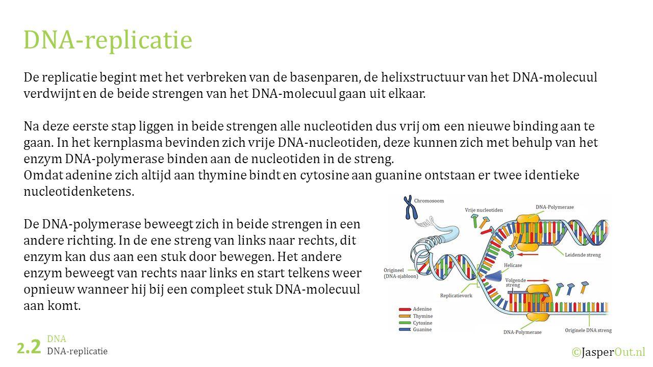 DNA 2.2 ©JasperOut.nl DNA-replicatie De replicatie begint met het verbreken van de basenparen, de helixstructuur van het DNA-molecuul verdwijnt en de