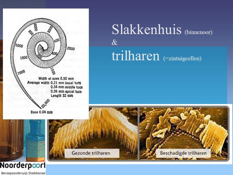 Slakkenhuis (binnenoor) & trilharen (=zintuigcellen)